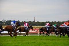 Competencia de la carrera de caballos Foto de archivo