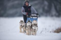 Competencia de la raza del trineo del perro Fotografía de archivo