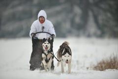 Competencia de la raza del trineo del perro Imagenes de archivo