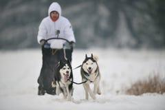 Competencia de la raza del trineo del perro Fotos de archivo