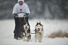 Competencia de la raza del trineo del perro Foto de archivo libre de regalías