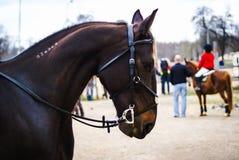 Competencia del caballo Fotografía de archivo