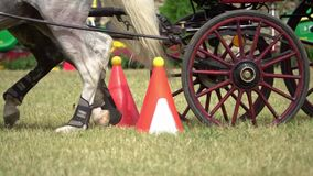 Competencia del carro de dos caballos metrajes