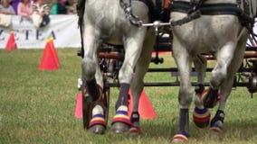 Competencia del carro de dos caballos almacen de metraje de vídeo