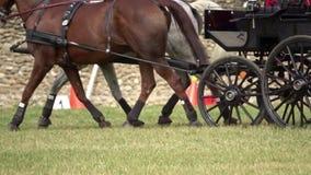Competencia del carro de dos caballos almacen de video