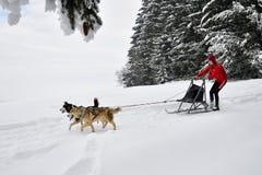 Competencia del trineo del perro imagen de archivo