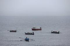Competetions команд rowing дилетанта внутри стоковые фотографии rf
