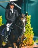 Competição do Showjumping, cavalo de baía e cavaleiro no uniforme preto que vai executando o salto Fotografia de Stock Royalty Free