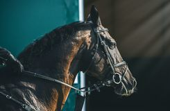 Competição do Showjumping, cavalo de baía e cavaleiro no uniforme preto que vai executando o salto Imagem de Stock
