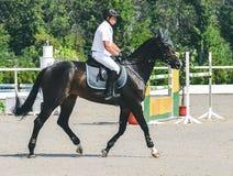 A competição do Showjumping, o cavalo de baía e o cavaleiro na execução uniforme branca saltam sobre o freio Imagens de Stock