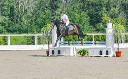A competição do Showjumping, o cavalo de baía e o cavaleiro na execução uniforme branca saltam sobre o freio Imagem de Stock Royalty Free