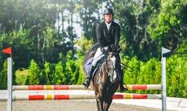 A competição do Showjumping, o cavalo de baía e o cavaleiro na execução uniforme preta saltam sobre o freio Fotografia de Stock Royalty Free