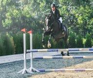 A competição do Showjumping, o cavalo de baía e o cavaleiro na execução uniforme preta saltam sobre o freio Foto de Stock