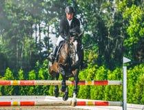 A competição do Showjumping, o cavalo de baía e o cavaleiro na execução uniforme preta saltam sobre o freio Imagem de Stock Royalty Free