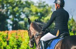 A competição do Showjumping, o cavalo de baía e o cavaleiro na execução uniforme preta saltam sobre o freio Fotos de Stock