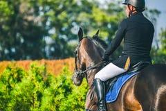 A competição do Showjumping, o cavalo de baía e o cavaleiro na execução uniforme preta saltam sobre o freio Imagens de Stock