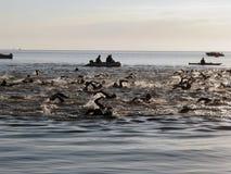 Competição do Triathlon Fotografia de Stock Royalty Free