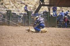 Competição roping da vitela, rodeio indiano cerimonial intertribal, Gallup nanômetro fotos de stock royalty free