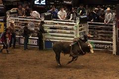 Competiam profissional do cavaleiro de Bull em Madison Square Garden imagens de stock