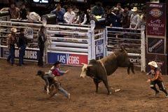 Competiam profissional do cavaleiro de Bull em Madison Square Garden imagem de stock