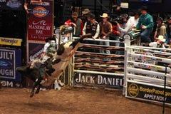 Competiam profissional do cavaleiro de Bull em Madison Square Garden fotografia de stock royalty free