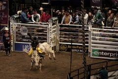 Competiam profissional do cavaleiro de Bull em Madison Square Garden imagem de stock royalty free