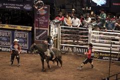 Competiam profissional do cavaleiro de Bull em Madison Square Garden foto de stock