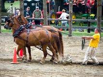 Competición del tirón del caballo Fotografía de archivo