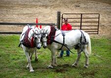 Competición del tirón del caballo Fotos de archivo