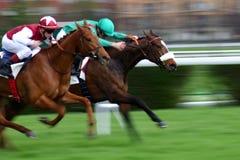 Competición entre dos caballos foto de archivo