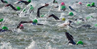 Competidores que nadan hacia fuera en el agua abierta al principio de Triathlon Imágenes de archivo libres de regalías