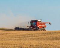 Competindo o Sun para terminar a colheita do trigo Imagens de Stock Royalty Free