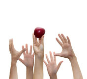 Competition. On hand holds a red apple up while four others try to reach it Royalty Free Stock Images