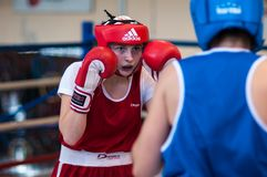 Competition Boxing between girls. Stock Image