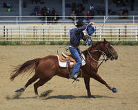 Competition in roping. Young man roping calf at rodeo Stock Images