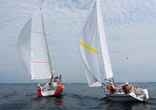 Competition sails. Stock Image
