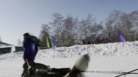 Competition in sled dog racing and skijoring stock video footage