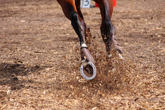 Competitions on concours - the horse skips on a fi Royalty Free Stock Photos
