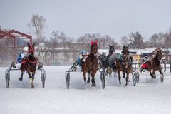 Winter. Running is a test of trotters. Competitions in equestrian sport in the winter. Reportage. Runs - test the horses of trotting breeds for speed in the Stock Image