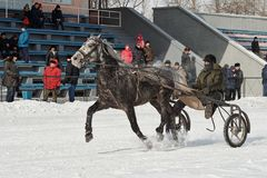 Winter. Running is a test of trotters. Competitions in equestrian sport in the winter. Reportage. Runs - test the horses of trotting breeds for speed in the Stock Photos