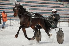 Winter. Running is a test of trotters. Competitions in equestrian sport in the winter. Reportage. Runs - test the horses of trotting breeds for speed in the Stock Images