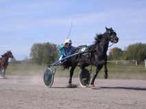 Competitions horses trotting breeds Novosibirsk racetrack horse and rider stock photography