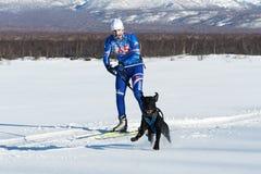 Competitions on skijoring skijor races in Kamchatka. PETROPAVLOVSK-KAMCHATSKY, KAMCHATKA PENINSULA, RUSSIA - DEC 10, 2016: Sportsman skier-racer Klimov Ivan and Stock Photo