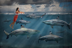 Competitive Business Concept With Businesswoman and Sharks. Competitive business concept with businesswoman swimming with sharks royalty free stock photo