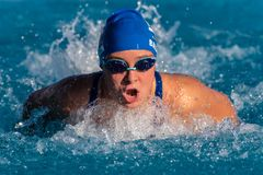 Timing the strokes to breathe. Competitive female swimmer coming up to breathe during powerful butterfly stroke during race royalty free stock image