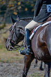 Competitive horse and rider Royalty Free Stock Image