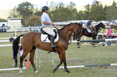 Competitive show horse and rider Queensland country Australia. A male horseman rider and and his beautiful thoroughbred horse preparing for the obstacle course Stock Photos