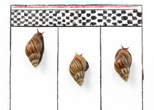 Competitive Snail Racing Royalty Free Stock Images