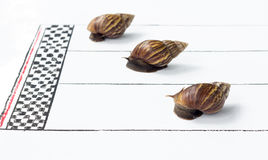 Competitive Snail Racing Stock Photo
