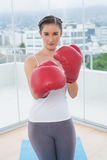 Competitive sporty brunette wearing red boxing gloves Royalty Free Stock Photography